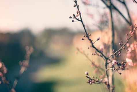 pexels-photo-689367